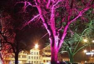 力侬照明:植物照明产业发展大计自动糊盒机